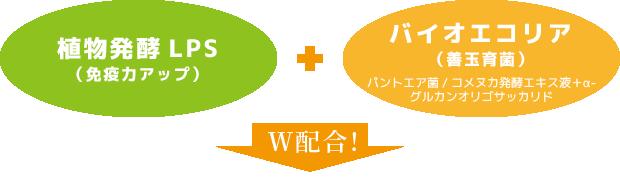 W配合の図